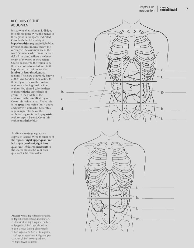 anatomy and physiology coloring workbook answer key chapter 3