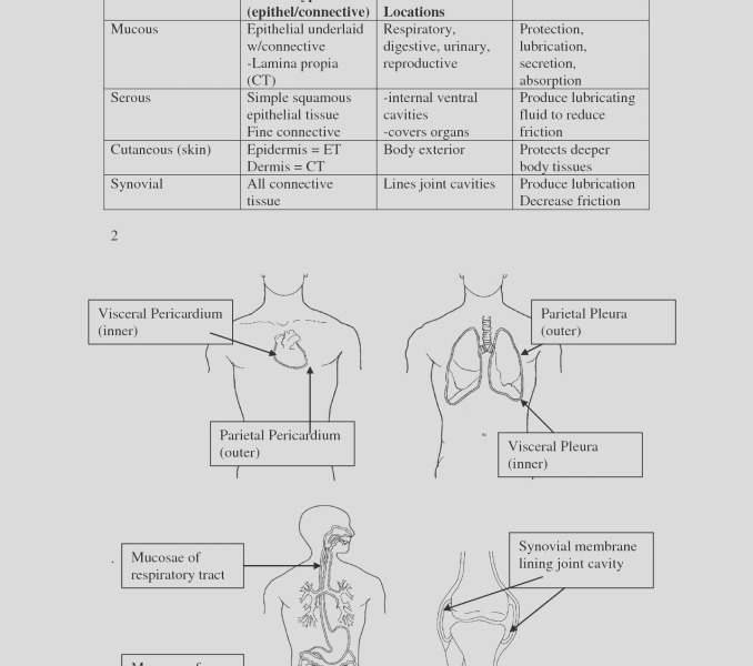 anatomy and physiology coloring workbook answers chapter 11 page 178