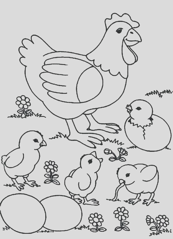 chicken coloring pages for kids