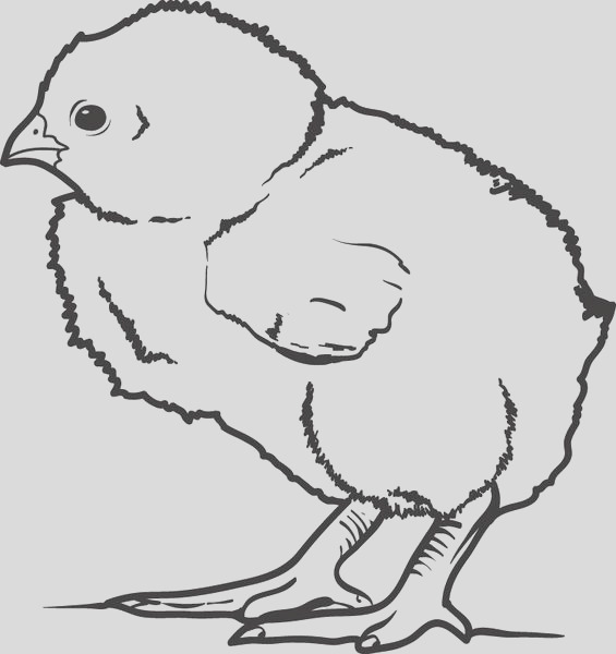 little baby chick coloring page a4380