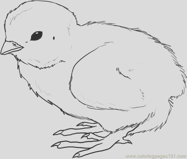 baby chicken drawing