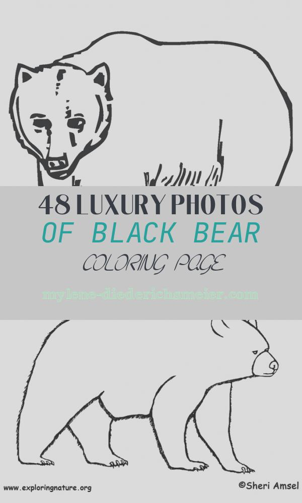 Black Bear Coloring Page Luxury Black Bear Coloring Page Twisty Noodle