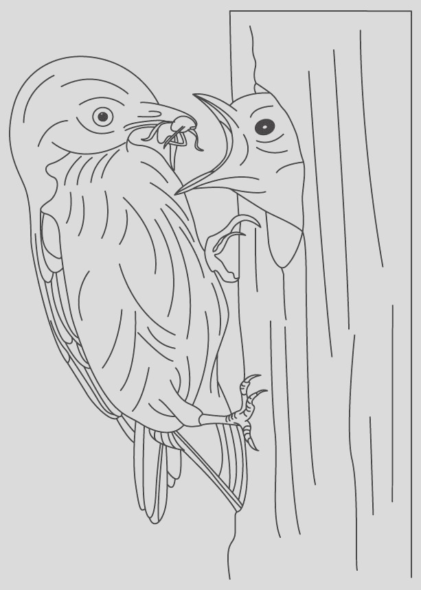 bluebird feeding its baby coloring page 1d4345