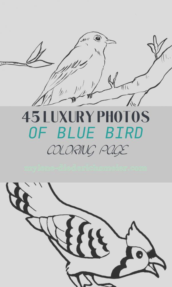 Blue Bird Coloring Page Unique Bluebird Coloring Page Art Starts for Kids