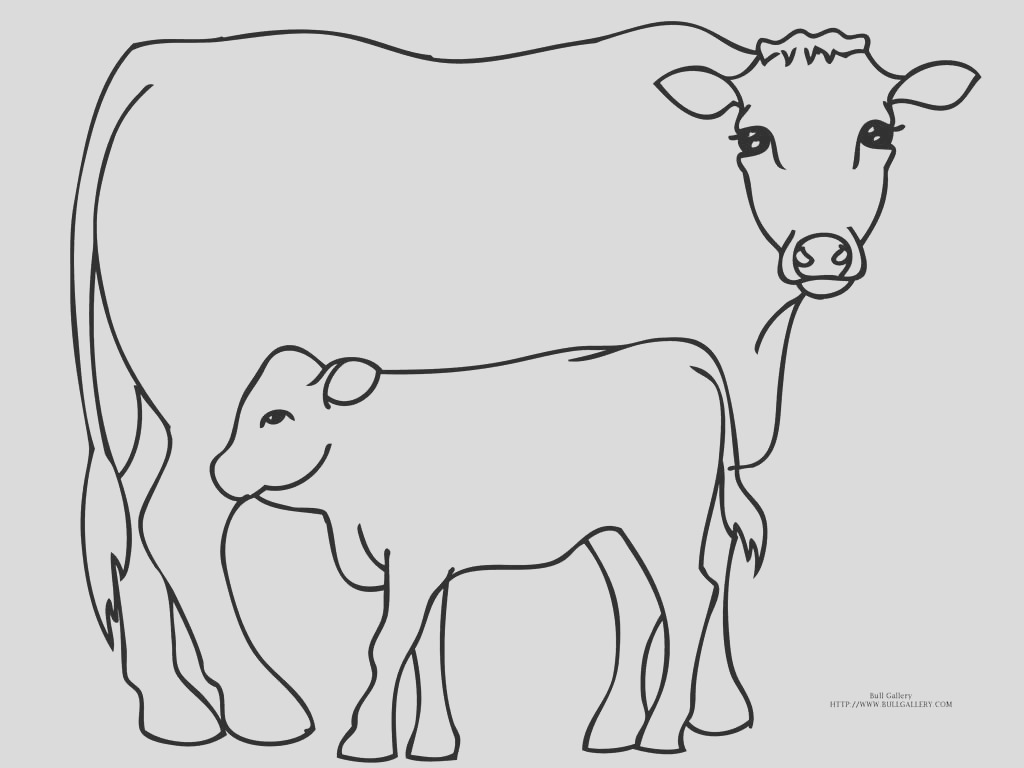 bull pictures to color free