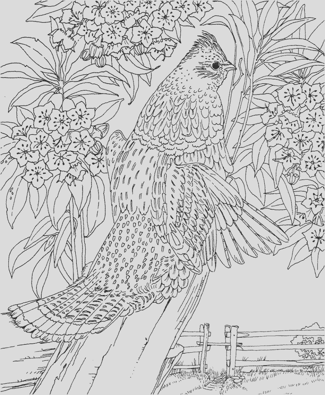 difficult adult coloring pages to print out