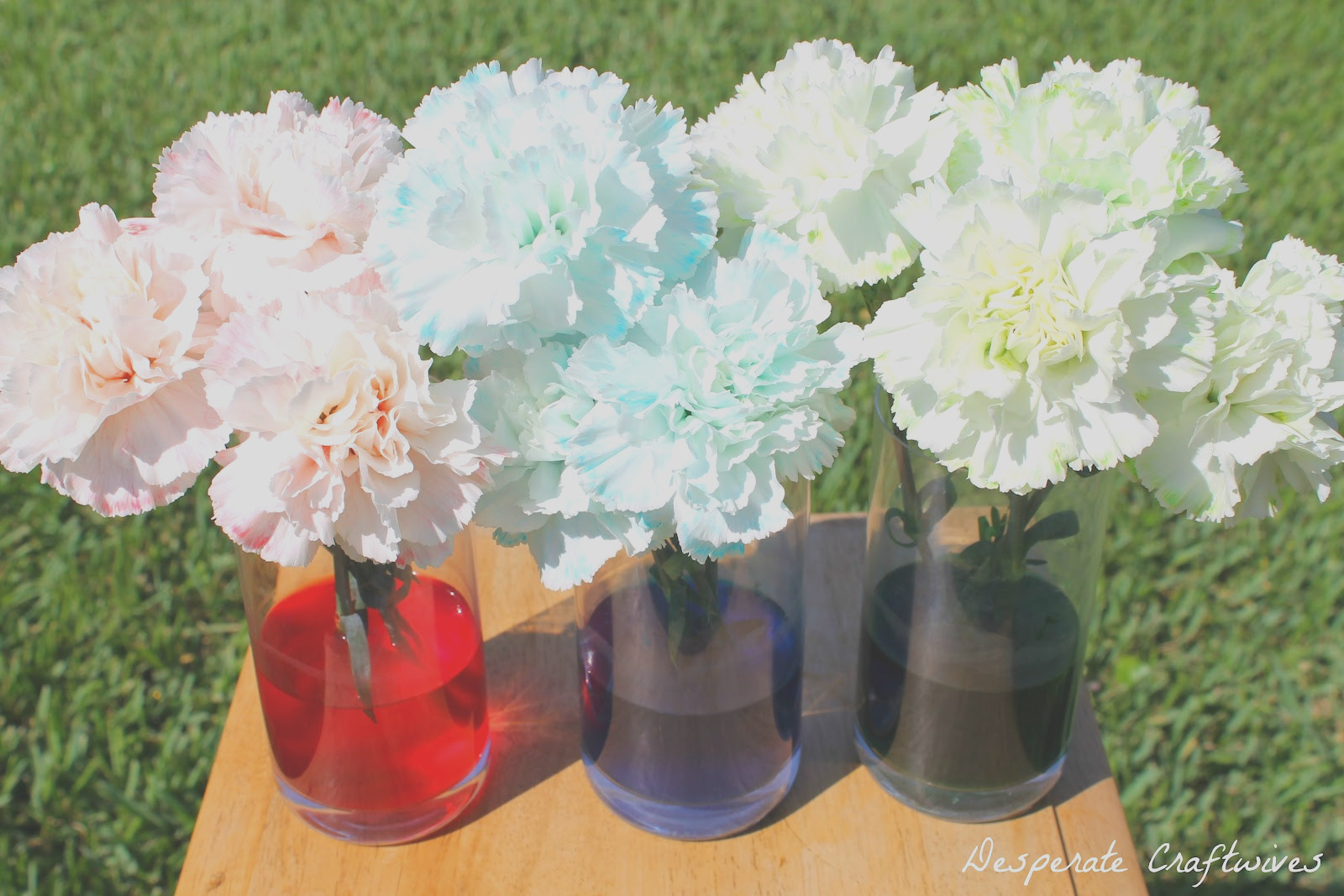 colored carnation experiment