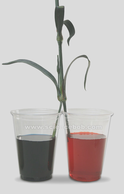 color flowers using science