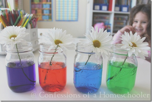 science experiment colored flowers
