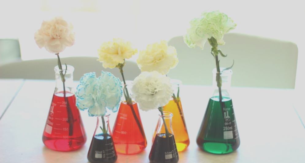 carnation science experiment