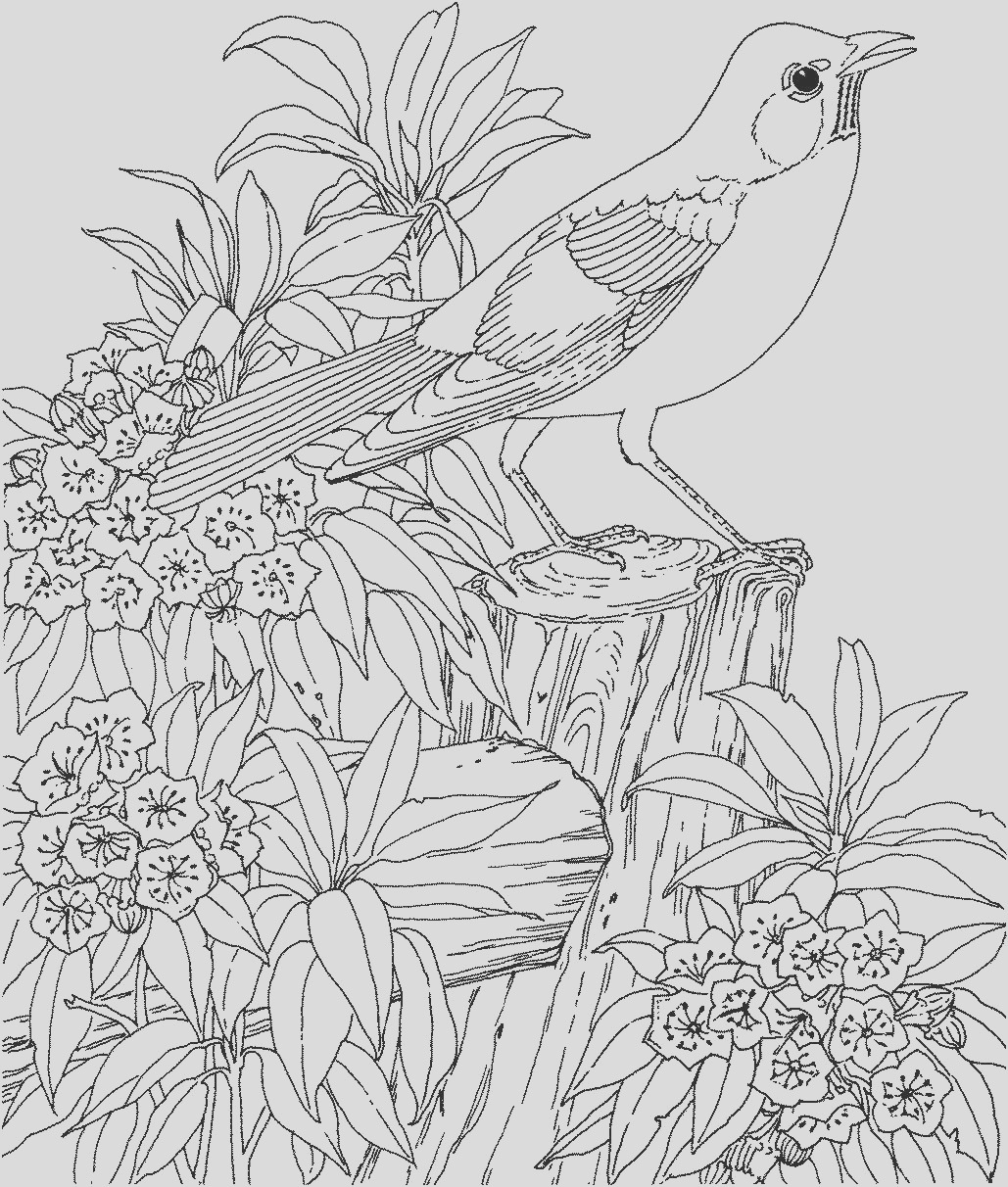 coloring pages for adults printable coloring pages for adults adult coloring pages 12 printable coloring pages