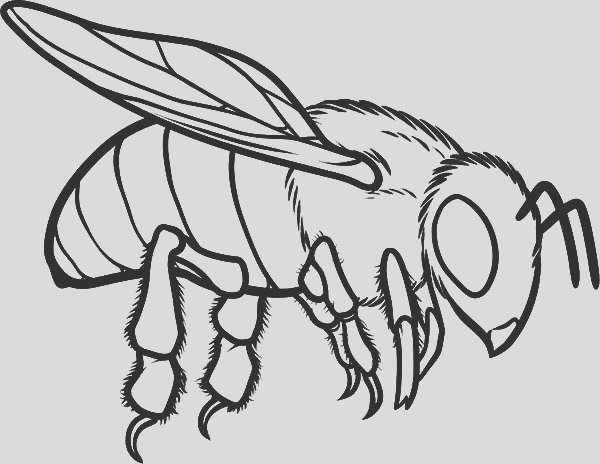 european honey bee coloring pages