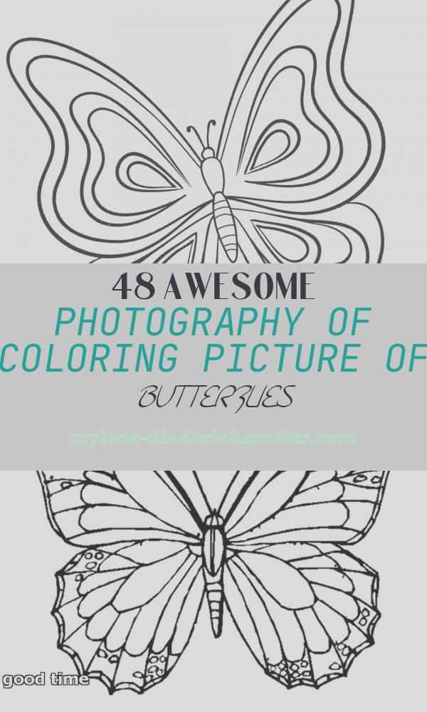 Coloring Picture Of butterflies Beautiful Printable butterfly Coloring Pages for Kids