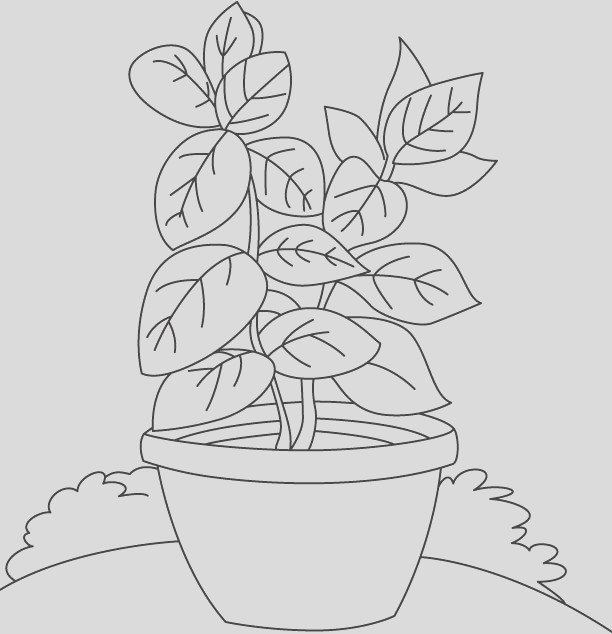 called king herb basil herb colouring pages
