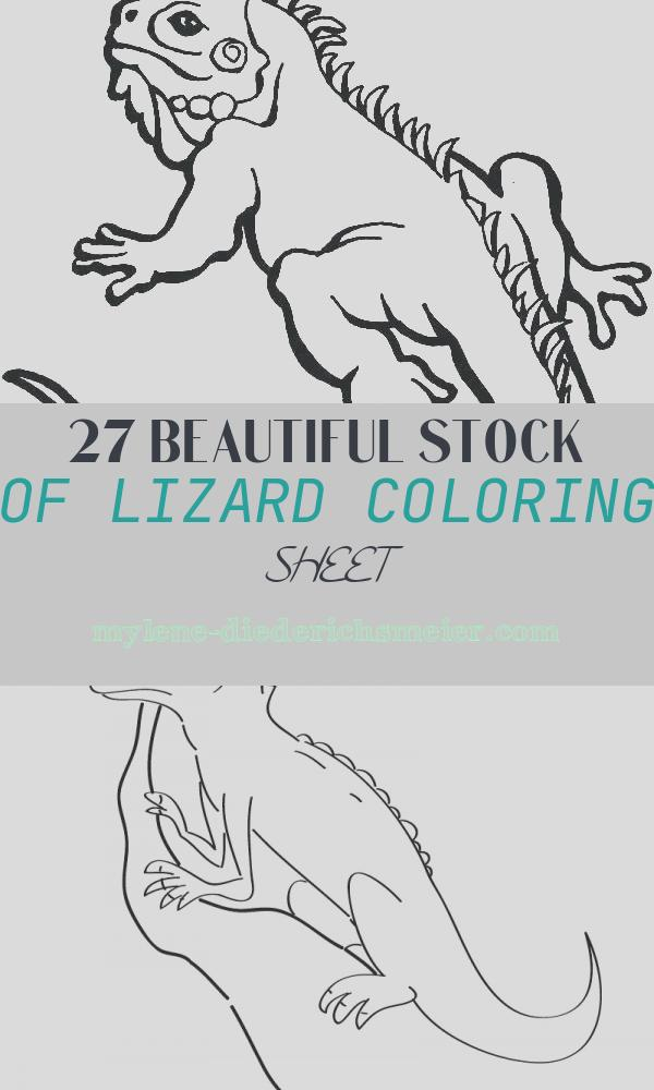 Lizard Coloring Sheet Beautiful Lizard Drawing for Kids at Getdrawings