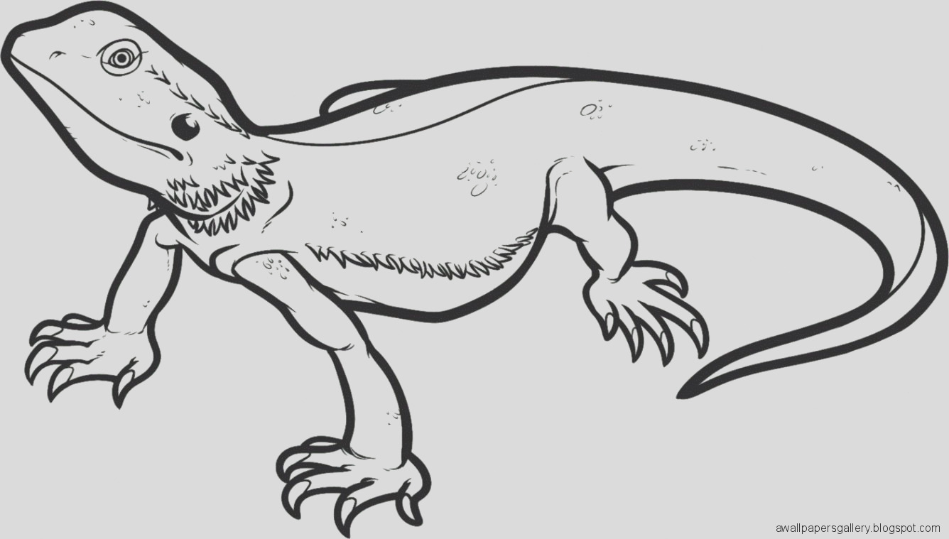 lizard drawing template