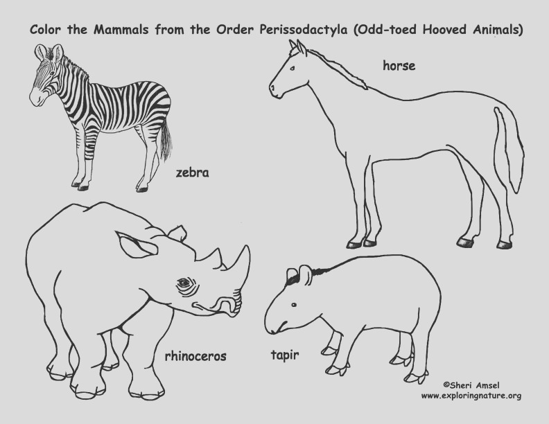 Zebras Horses Rhinos Tapirs Odd toed Hooved Mammals Coloring