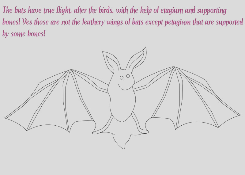 6502 Flying Mammal coloring pages
