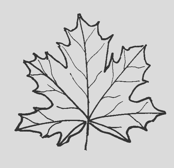 leaf coloring pages for kids