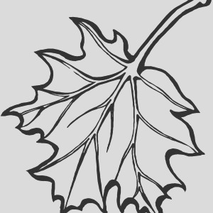white maple leaf coloring page