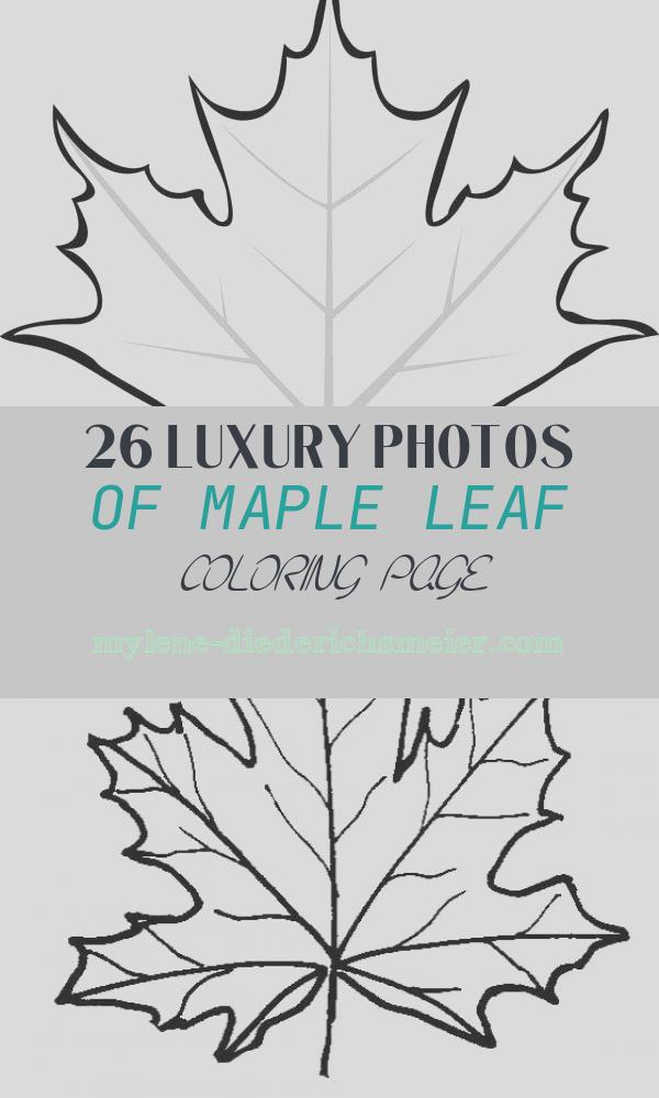 Maple Leaf Coloring Page Beautiful Maple Leaves Coloring Pages