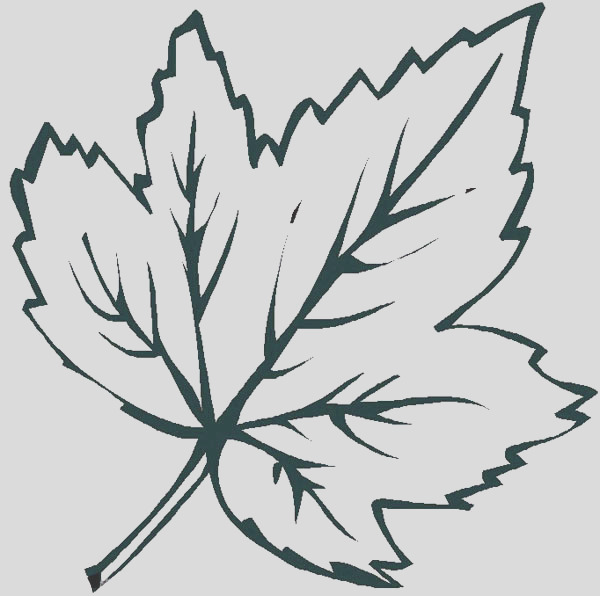 maple leaves coloring pages
