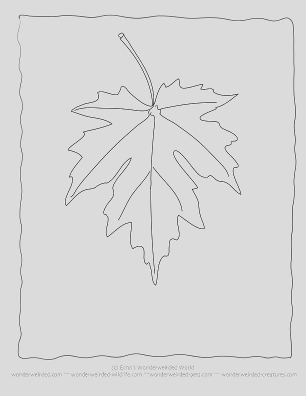 maple leaf drawing template