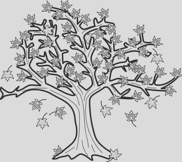 category coloring page