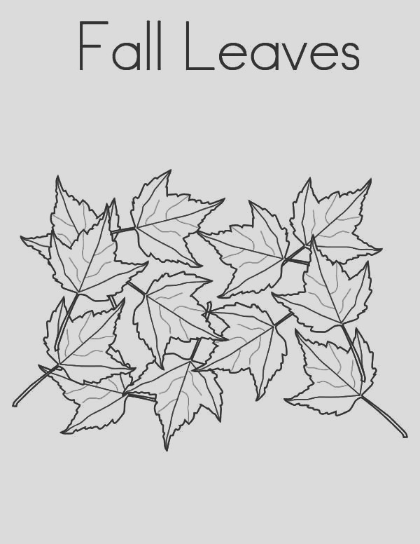 maple tree leaves in autumn season coloring page