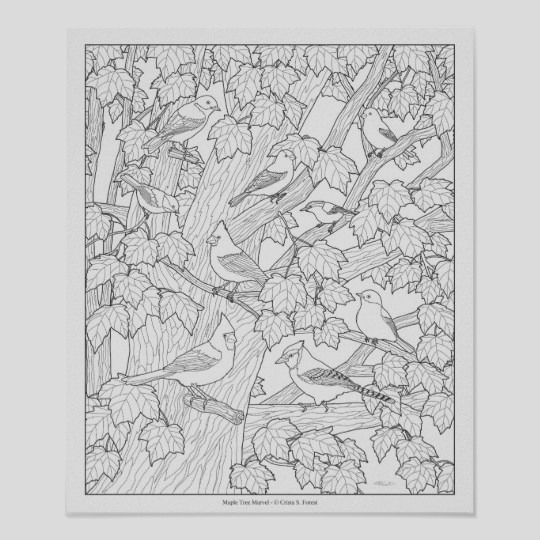 birds and maple tree adult coloring page 12 x10 poster