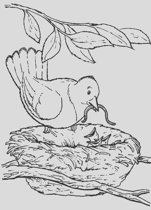 BackYard Animals and Nature Coloring Books