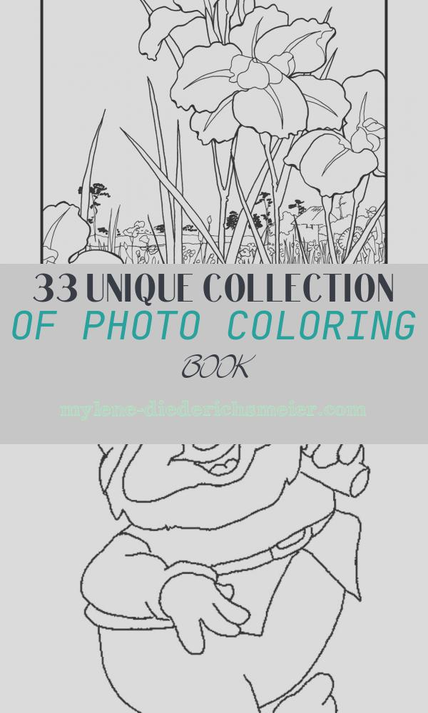 Photo Coloring Book New Hiroshige Flowers Japanese Colouring Book