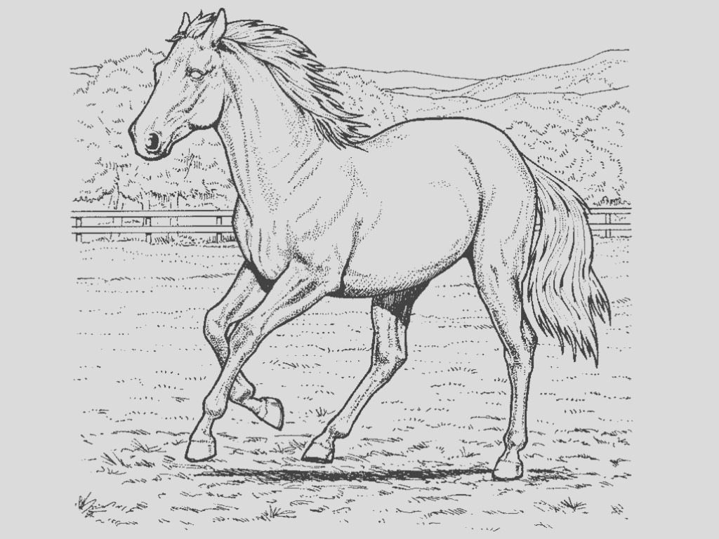 horse coloring pages photo