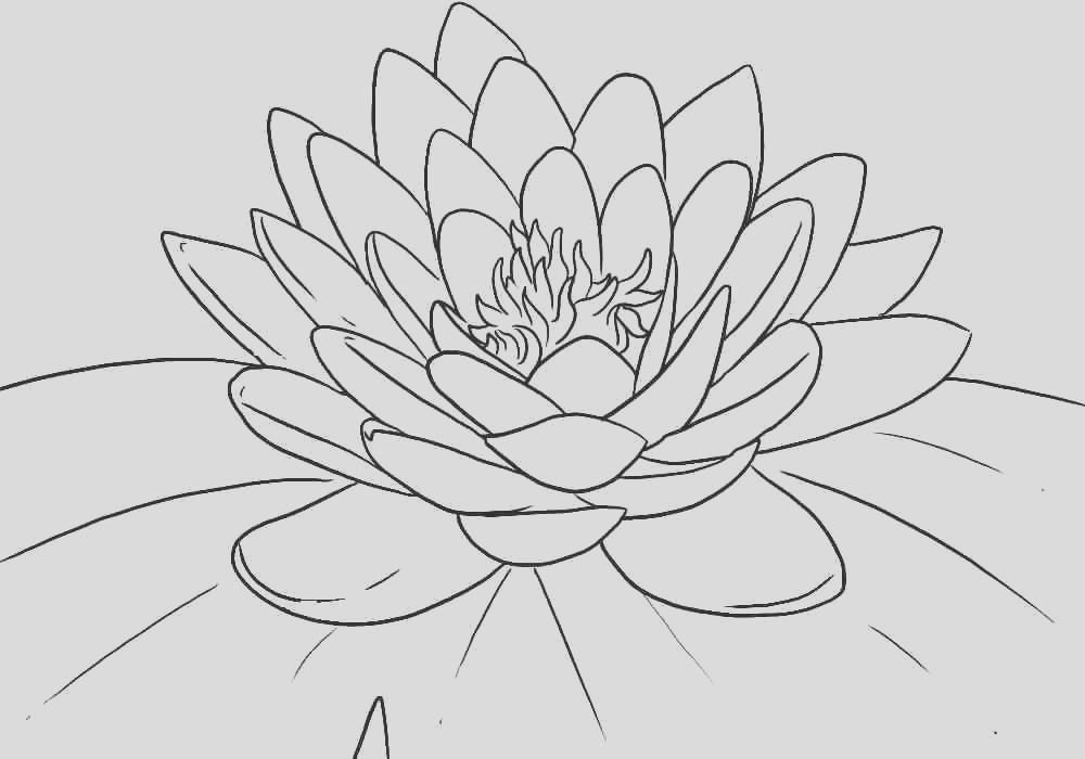 lotus coloring pages