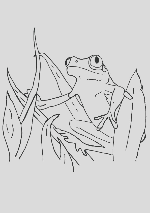 red eye tree frog coloring pages