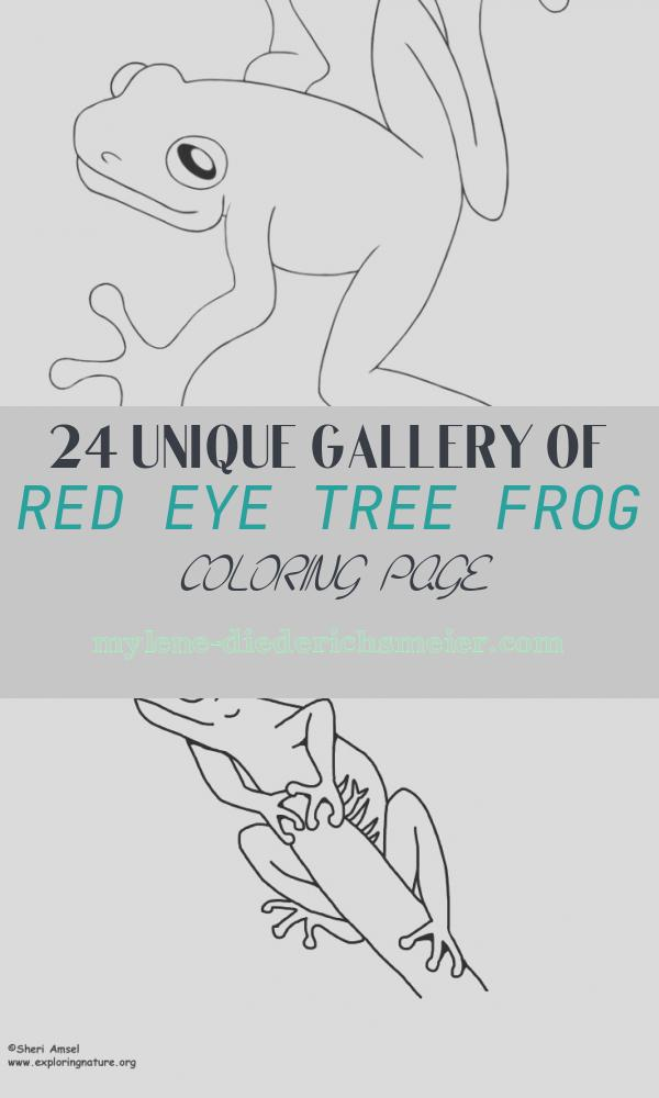 Red Eye Tree Frog Coloring Page Lovely Free Printable Frog Coloring Pages for Kids