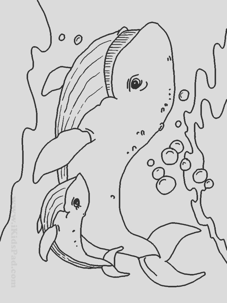 sea creatures drawing