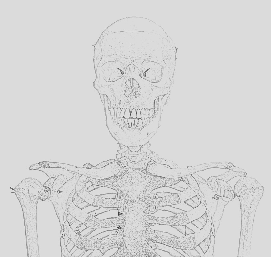 skeleton free printable coloring pages