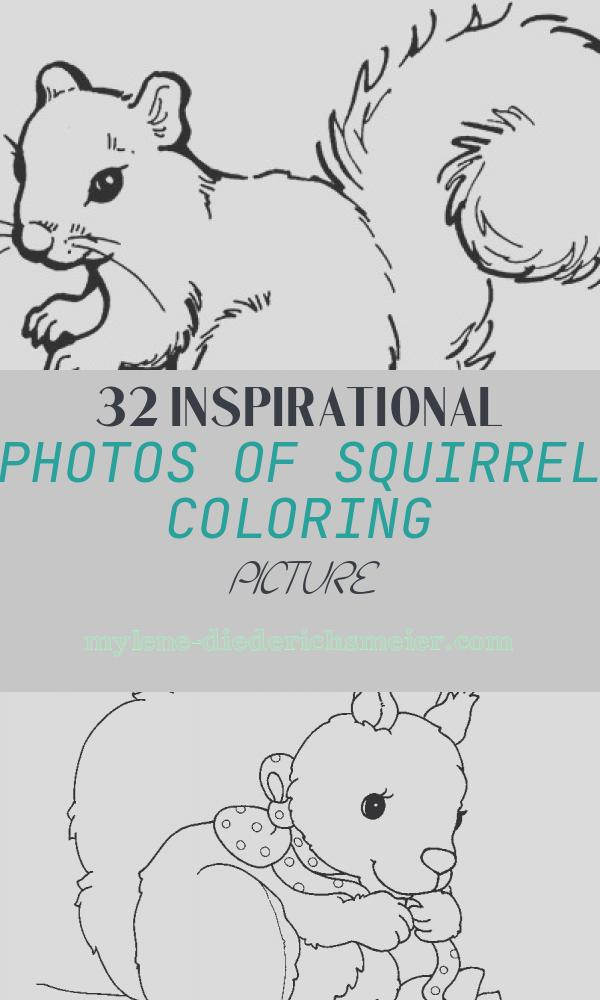 Squirrel Coloring Picture New Squirrel Coloring Page