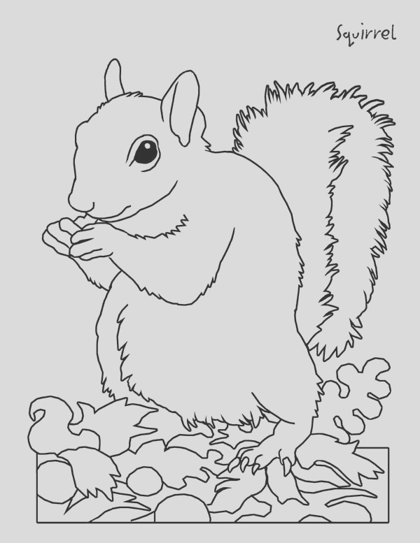 picture of squirrel coloring page