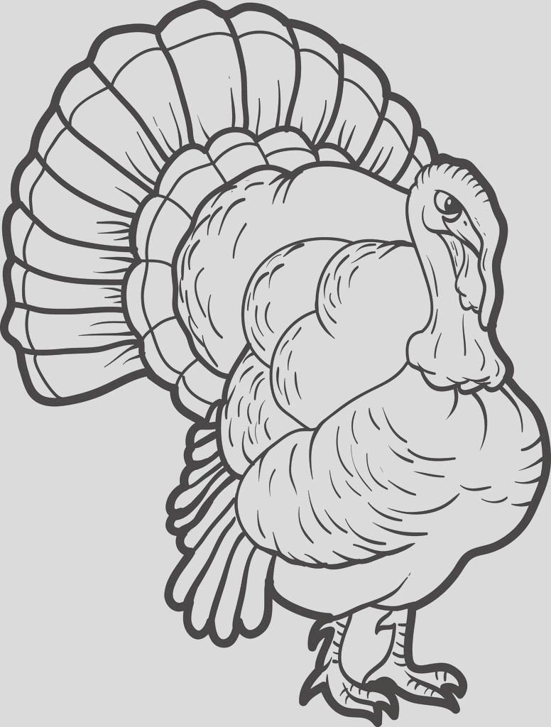 turkey coloring page 13 a4730