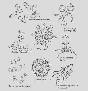 germs lesson