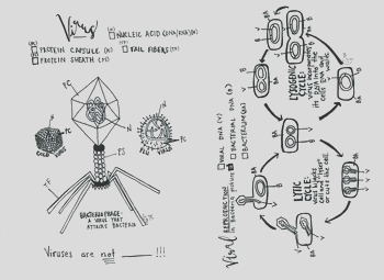 Virus coloring sheet lysogenic and lytic cycle