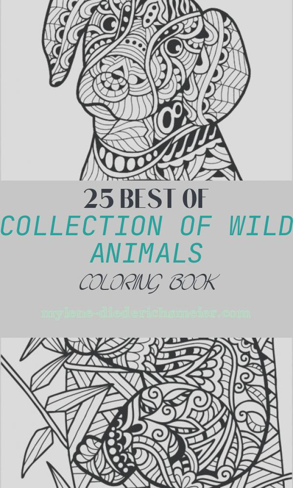 Wild Animals Coloring Book Luxury Wild Animals Coloring Book for Adults by Colorit