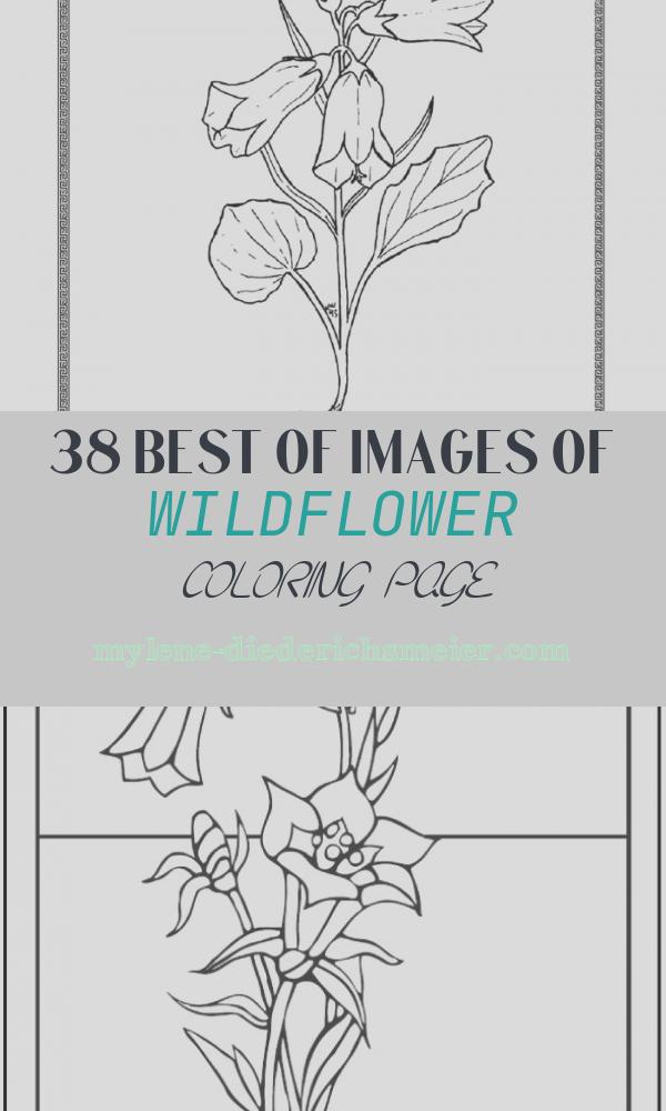 Wildflower Coloring Page Lovely Celebrating Wildflowers Coloring Page