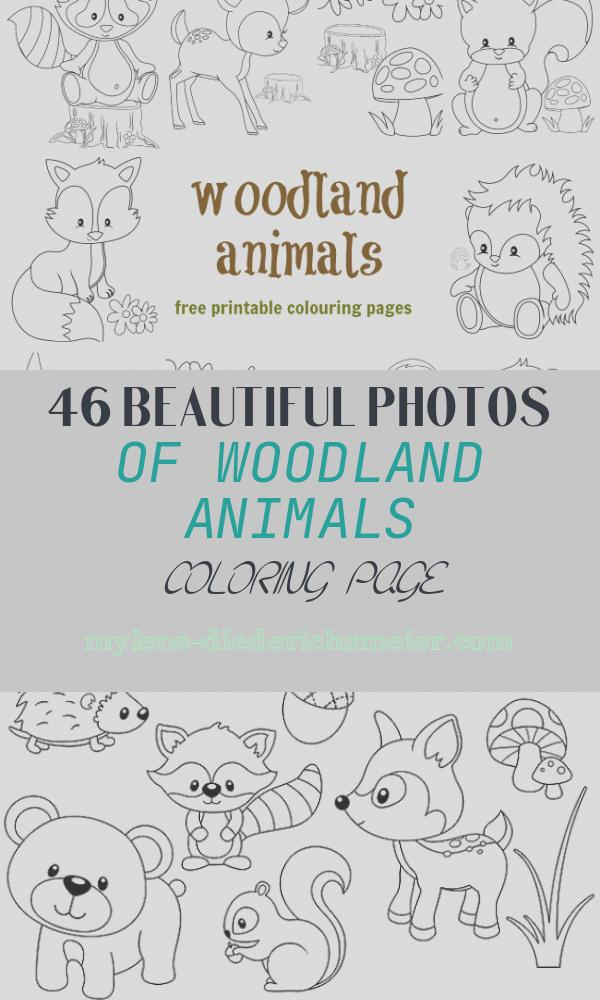 Woodland Animals Coloring Page Inspirational Woodland Animal Colouring Pages Messy Little Monster