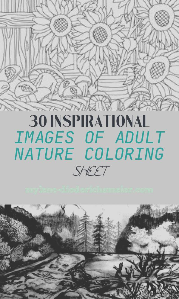 Adult Nature Coloring Sheet Luxury 1162 Best Adult Coloring Pagesideas Images In 2020
