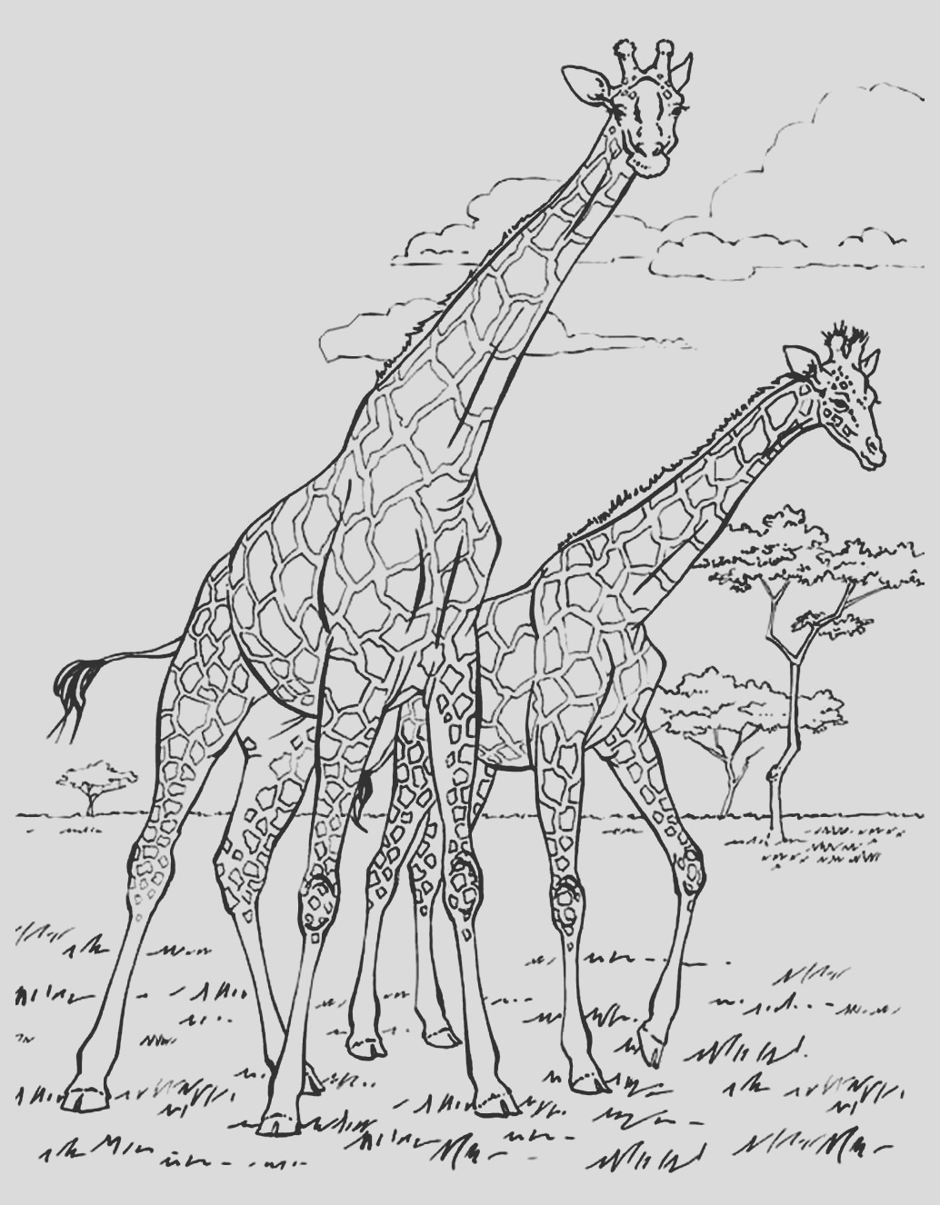 image=africa coloring adult africa giraffes 1