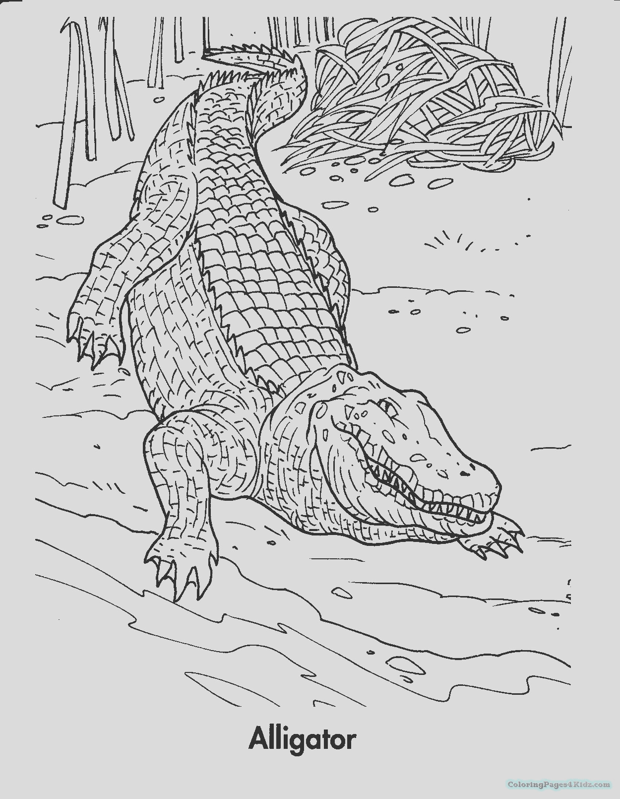 alligator coloring pages 103