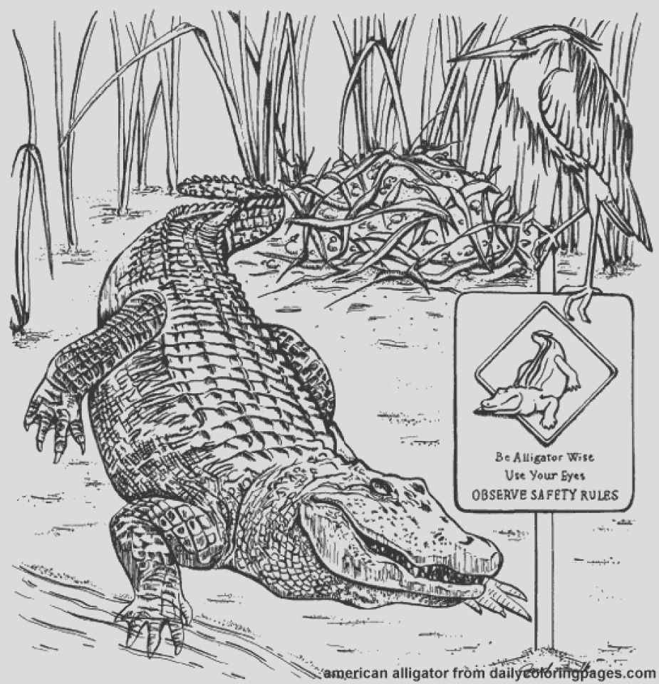 picture of alligator coloring pages free for children upmly